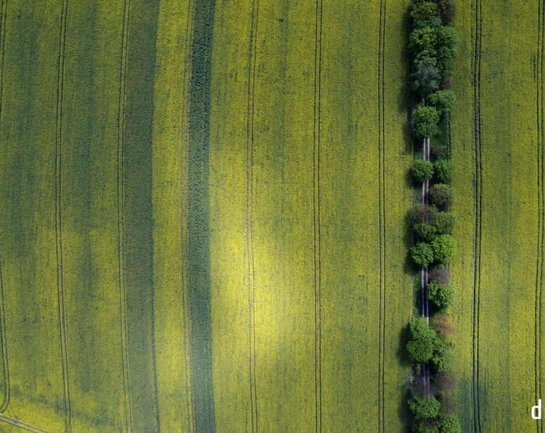 Drone Eye zdjęcie z drona pole rzepakowe