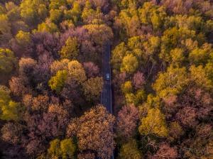 Gliwice wiosna droga samochod